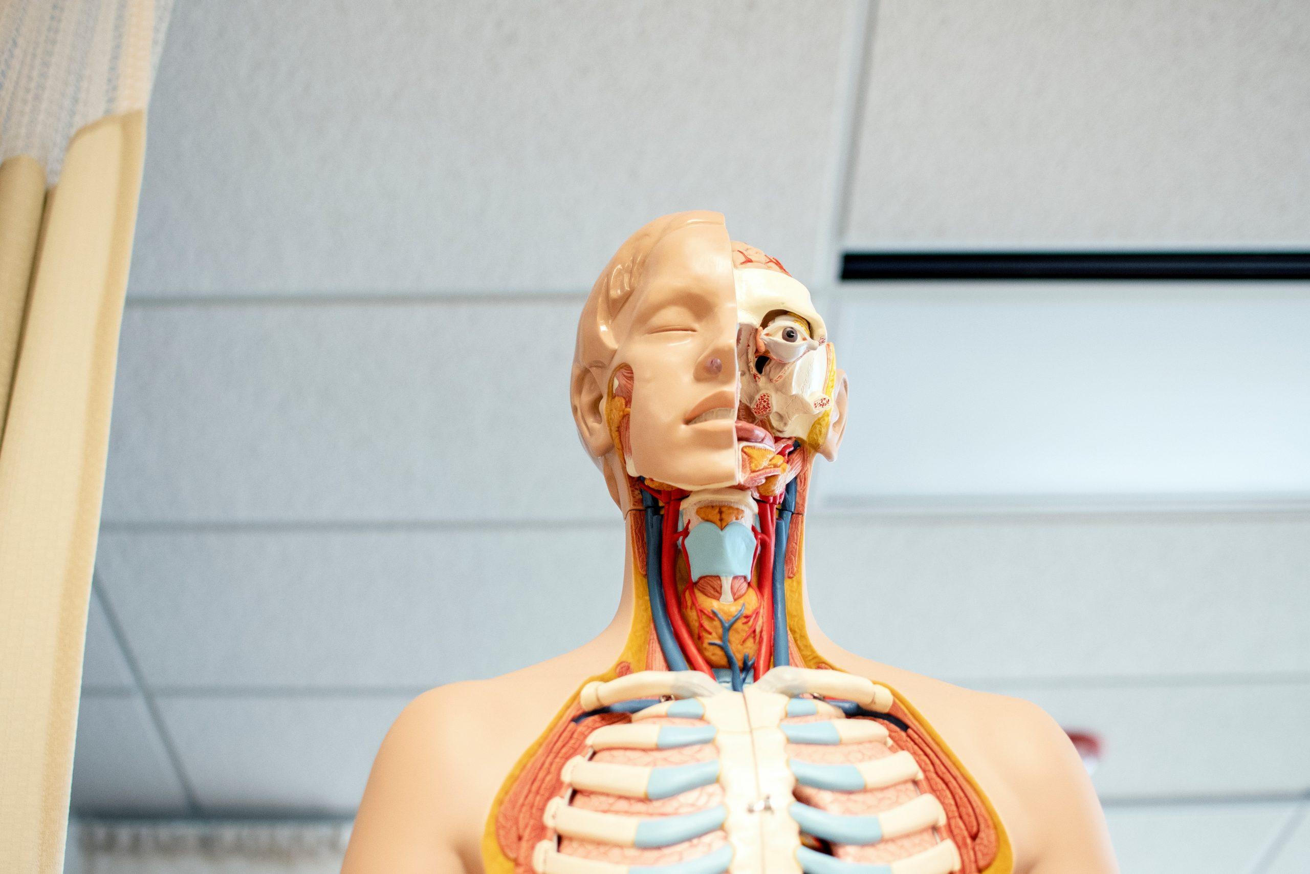 3D scheletro come simbolo di realtà virtuale
